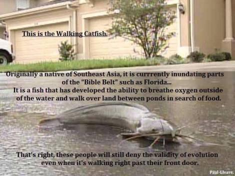 catfisch